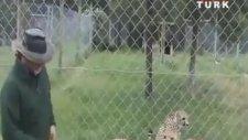 Çitalar Kedi Gibi Miyavlıyor