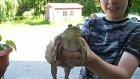 Vıraklamayan Kurbağa