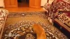 Marionun Zıplama Sesine Tiki Olan Kedi