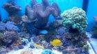 My Reef Yeni Balıklar Tanka Girdi