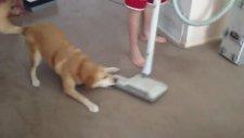 Köpek ve Elektirikli Süpürge