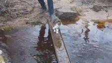 Kibar Kedi Suya Basmadan Köprüden Geçiyor