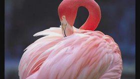 Hooverphonic - Pink Flamingo Dream
