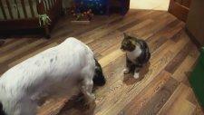 Kedi ile Köpeğin Komik Kavgası
