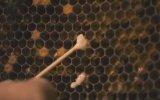 More Than Honey Fragmanı