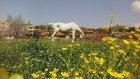 Kocabey Köyü Tanıtım