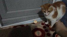 Portakal Kabuğundan Korkan Kedi