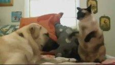 Birbirinden Komik Kediler