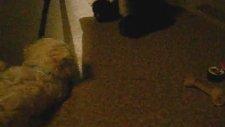 Köpek Oyun Oynamak İstiyor