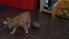 Zıp Zıp Kedi