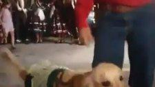 Sahibiyle Dans Eden Köpek