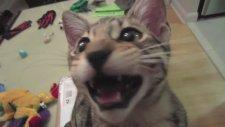 Kediye Ses Dublajı Yapılırsa