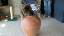 Çömleğe Girmeye Çalışan Kedi