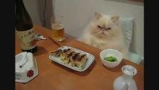 Garfield'in Japon Kuzeni