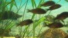 Balık Akvaryumu