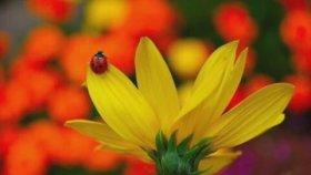 Emin Güllüce - Bahar Geldi Gül Açtı