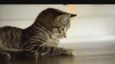 National Geographic : Büyük Kediler Haftası Muhteşem Tanıtım Filmi
