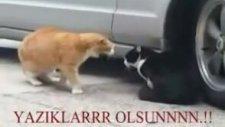 Sevgilisine Kızan Kedi - Türkçe Altyazılı