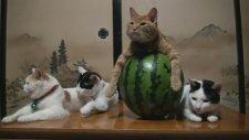 Dünyanın en sabırlı kedileri!