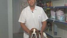 Pet Süpermarket - Beagle Bakımı