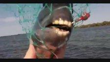 Eşek Dişli Balık