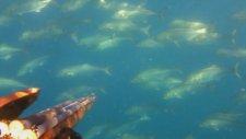 Zıpkınla Balık - Spearfishing - Pesca Sub