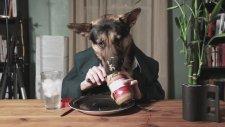 Fıstık Ezmesi Yiyen Köpek