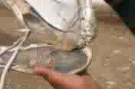 Taban Ayakkabıları Türkün Gücü!
