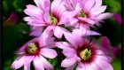 Çiçeklerdeki Muhteşem Yaratılış