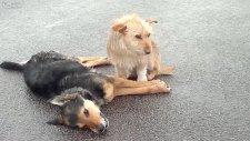 Otoyoldaki Bir köpeğin İnsanlığa Verdiği Ders