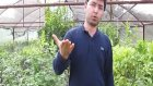 Ev ortamında Saksıda Balkonda Terasta Balkonda Gül Yetiştiriciliği