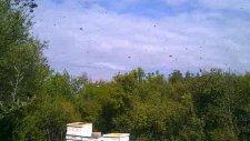 Arı Kovanları