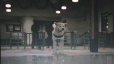 Hachiko monogatari - Bittersweet (Akita dog)