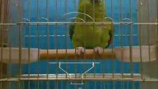 Dua Okuyan Papağan