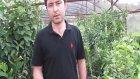 Badem Fidanı Ağacı Ülkemizde Hangi Topraklarda Yetişir