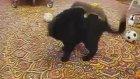 Kedi ve Gelincik Kapışmasına varmısınız?
