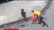 Köpekler taş atan adama böyle saldırdı