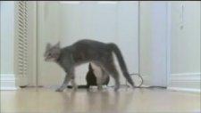 Dünyanın En Komik Kedileri