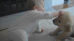 İlk Kez Tanışan Bebek Ve Yavru Köpek