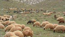 Gül Ahmet - Yiğit Köyüm