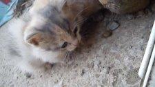 Şirin Yavru Kediler