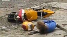 Maymunun Motorsiklet Kazası