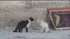 Acı Haberi Alan Kedi