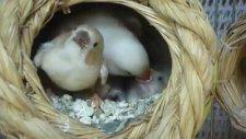 Sevimli Kuşlar