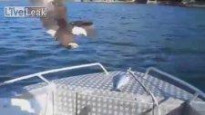 Kartal Teknedeki Balığı Kaptı