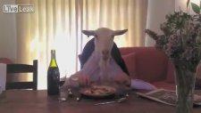 Keçinin Akşam Yemeği Keyfi