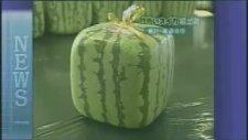 Japonlardan Küp Şeklinde Karpuz Üretimi