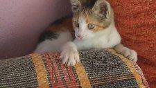Yaramaz Kedicik İş Başında