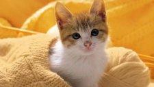 Dünyanın En Şirin Kedileri Bu Video'da