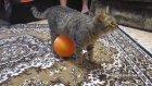 Kedinin Balonla İmtihanı